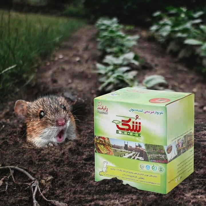 مرگ موش (شک بوم)